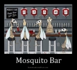 mosquito-bar